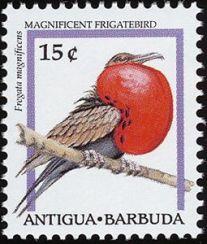 Magnificent-Frigatebird-Fregata-magnificens